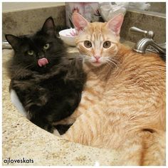 Sometimes you just want to cuddle with your best friend in a sink  #sinkcat #bff #hugs #tbt #cats #catlover #adoptdontshop  #catsofig #ilovemycat #kitten #instacute #meow #purrfect #crazycatlady #cat #cutecat #katze #gato #mygreatcat #furbaby #siblinglove