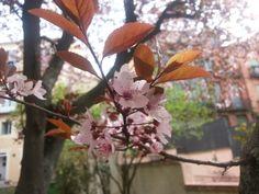 Segovia, jardín en flor el 03-04-2015