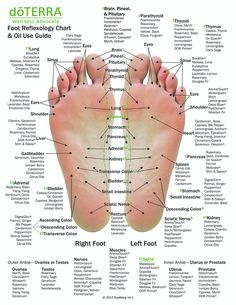 Calendula Benefits, Lemon Benefits, Coconut Health Benefits, Essential Oil Uses, Doterra Essential Oils, Heart Attack Symptoms, Tomato Nutrition, Foot Reflexology, Acupressure Massage