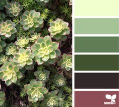 succulent hues // via design seeds Colour Pallette, Color Palate, Colour Schemes, Color Combos, Color Patterns, Pantone, Cactus E Suculentas, Inspiration Design, Color Harmony