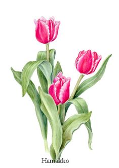 tulips drawing - Google Search