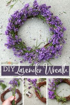 DIY Lavender Wreath – the great thing about pruning back your lavender plants is that you can harvest lavender to use in a myriad of ways like pretty fragrant wreaths. The fresh lavender buds and flowers dry on the wreath and it looks so decorative. Lavender Wreath, Lavender Buds, Lavender Plants, Garden Projects, Garden Tools, Diy Projects, Garden Art, Outdoor Shower Fixtures, House Plants Decor