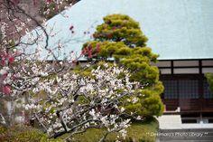 浄妙寺:70-200mm 鎌倉2013[4-1] : Dekimaro's Photo Diary