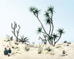 Didier Massard, Cactus Garden, Didier conceives of his works from the recesses of his imagination while drawing from our collective romantic and touristic notions of nationality and place.