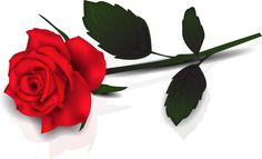Lovely Transparent Red Rose Clipart