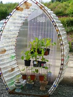 Plastic beverage bottles reused to make a mini greenhouse. Incredible idea!