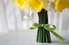 green and yellow, daffodils