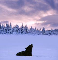 Help, wolf stuck here.....help me.....GUYYYYYYYYYYYS.....