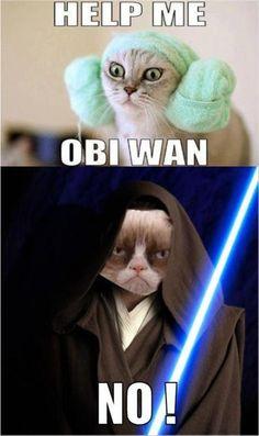 Grumpy Cat Haciendo De Las Suyas #LaImagenDelDia
