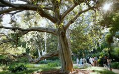 Norton Simon Museum, Pasadena, CA - The Most Beautiful Public Gardens on the West Coast | Travel + Leisure