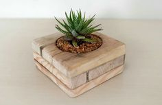 Small Flower Pots Made From Upcycled Pallets Recycled Pallets Terrarium Cactus, Cactus Pot, Cactus Flower, Flower Bookey, Flower Film, Succulent Display, Succulent Planter Diy, Succulents, Wooden Planters