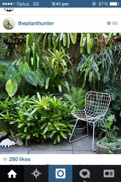 Layered planting of bromeliads, ground level and wall hanging