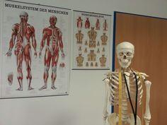 #anatomy #bone #bone structure #doctor #doctors lounge #doctors office #hospital #medical #muscles #skeleton #teaching #teaching board