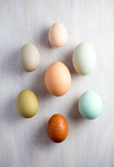 """""""We raised these hens from chicks and they finally started laying. The different breeds produce different colored eggshells.'"""