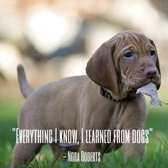 110 Best Dog Quotes images in 2019
