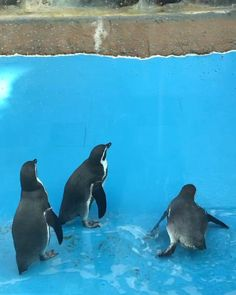 Clever Animals, Cute Baby Animals, Cute Animal Photos, Cute Pictures, Funny Cute Cats, Baby Penguins, Fluffy Animals, Funny Animal Videos, Pet Birds
