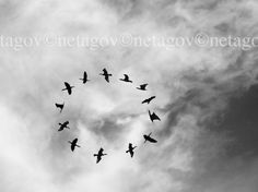 Birds Photograph Art Photography Birds sky by netagovdigitalart