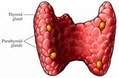 Hiperparatireoidizam