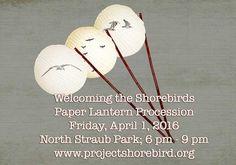 Welcoming the Shorebirds!