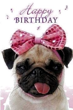 Happy Birthday Picture Quotes, Happy Birthday Pug, Birthday Greetings For Daughter, Happy Birthday Daughter, Happy Birthday Wishes Cards, Birthday Wishes Quotes, Birthday Images, Funny Birthday, Happy Birthday Funny Images