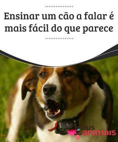 """Ensinar um cão a falar é mais fácil do que parece   Quantas vezes já dissemos sobre algum cão """"só falta falar"""" ou """"se ele pudesse falar""""? Saiba que ensinar um cão a falar já é uma realidade."""