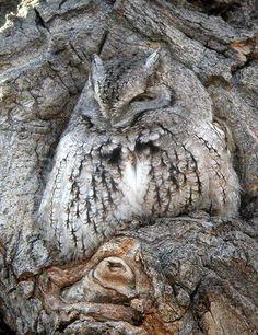 Camouflage owl bird