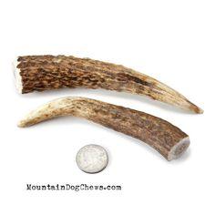 Petite Whole Elk Antler Dog Chew