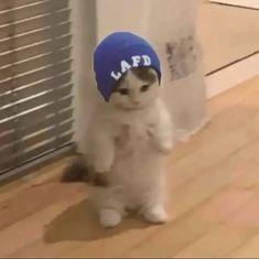Gato Minecraft, Minecraft Fan Art, Dream Team, Gato Anime, Cat Icon, Cat Stands, Pretty Boy Swag, Perfect Boy, Dream Art