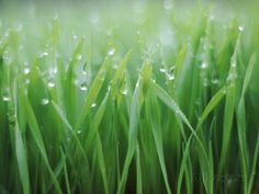 Wet grass Photographic Print by Michael Keller - at AllPosters.com.au