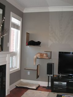 I love these cat shelves.  This website shows how they made their own DIY custom treasure spots for their cats.