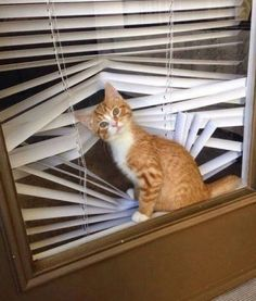 """""""Oh hello, you're home!"""" Cats do love a bit of mischief, don't they!"""
