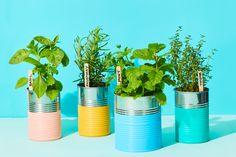 6 Tanaman Herbal, Obat Alami yang Bisa Tumbuh dalam Ruangan Halaman all - Kompas.com