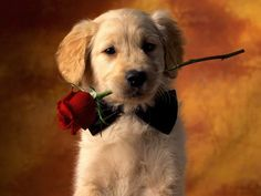 Lovely Puppy With a rose - 50 Lovely Puppy Pictures <3 <3