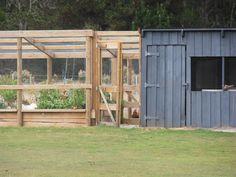 chook shed design