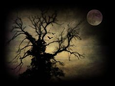 "tarotblades: "" The Dead Tree (by Weeping-Willow) "" Halloween Shots, Halloween Trees, Halloween Moon, Halloween Images, Vintage Halloween, Halloween Crafts, Happy Halloween, Spooky Trees, Weeping Willow"