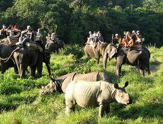 Jungle Safari in Nepal  Chitwan National Park