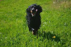 Gårdstunet Hundepensjonat: Flott dag med flotte hunder! Noen benytter seg av ...