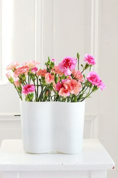 colorful pink and coral carnations in white Alvar Aalto vase.