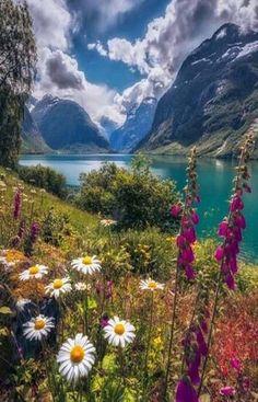 Valley of the Ten Peaks Wildflowers