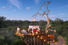 Chalkley's Treehouse, Lion Sands, Africa Top Honeymoon Destinations, Honeymoon Places, Treehouse Hotel, Unusual Hotels, Tree House Designs, Thing 1, Sleeping Under The Stars, Game Reserve, South Africa
