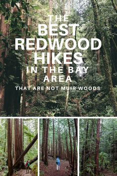 Redwood Hikes in the Bay Area - Exploring the best redwood hikes in the Bay Area.Exploring the best redwood hikes in the Bay Area. Bay Area Hikes, Hiking Places, San Francisco Travel, San Francisco Hikes, Camping And Hiking, Hiking Trails, Hiking Usa, Colorado Hiking, Backpacking Gear