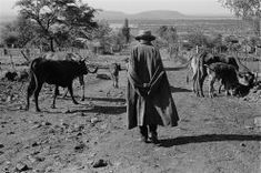 1913 Land Act: images of loss Photography Exhibition, Art Museum, South Africa, Cow, Acting, Culture, History, Portrait, Farmers