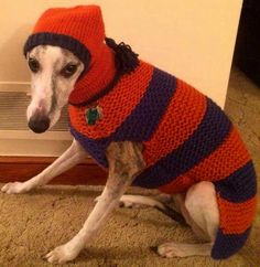 Nemesis will be warm today.  He is wearing couchpotatodogknits.etsy.com
