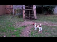 Puppy has conditioned response to other dogs barking