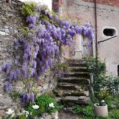 lilac-covered door (gypsypurplehome)
