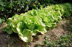 12 astuces pour commencer un jardin potager que tout débutant devrait savoir | Jardins et potagers