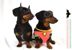 How to Take Celebrity Photos – Crusoe the Celebrity Dachshund