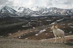 Denali Borough Land, Alaska, Vereinigte Staaten
