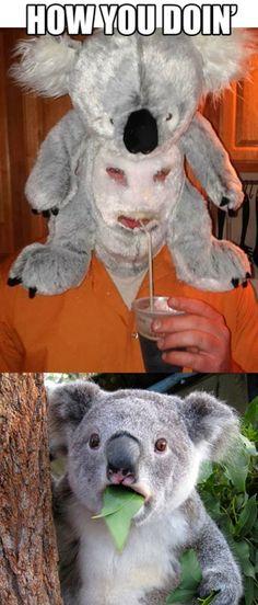 Funny animal pictures of shocked koala.