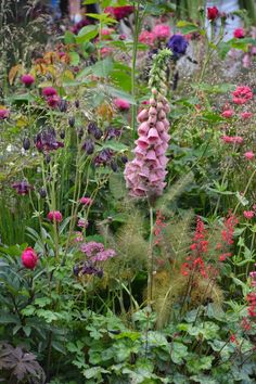 what lies ahead.with Spring preceding! Country Cottage Garden, Cottage Garden Plants, Big Garden, Dream Garden, Garden Landscape Design, Garden Landscaping, Beautiful Gardens, Beautiful Flowers, Garden Of Earthly Delights